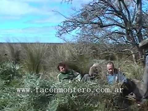 Colección Monteria Criolla con Dogos Argentinos