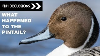 Duck Hunting 2017: The Fate of the Northern Pintail