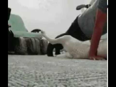 DOG DIRTY FUCKING VIDEO