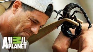 Frank deja que un escorpión lo pique | Wild Frank: En busca del dragón | Animal Planet