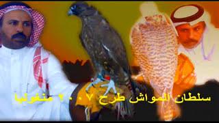 نسخة عن طرح 2007 منغوليا : سلطان المواش _ hunting Hawks in Mongolia in 2007: Sultan - Cattle