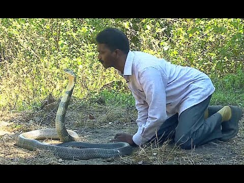 Vava Suresh Kissing a KING COBRA Vava Suresh Snake Master 18 03 2016 Kaumudy TV