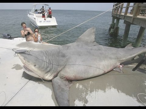 The 9 Biggest Sharks Ever Caught
