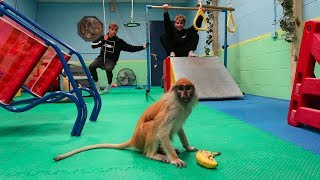 GYMNASTICS WITH A MONKEY!