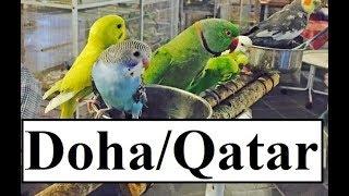 Qatar/Doha Waqif BIRDS Souq  Part 9