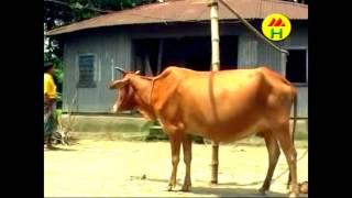 বাদাইমা দেখুন আর হাসুন