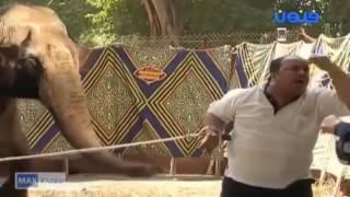 الكاميرا الخفيه زكيه زكريا 2011 مقلب الفيل من اجمل المقالب المضحكة