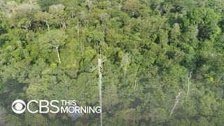 On the front lines of the battle against Amazon deforestation