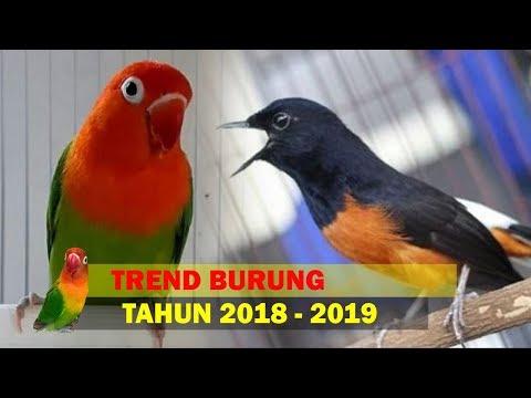 5 Burung Bakal Trend Di Tahun 2019 Mendatng