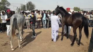Nagaur Patrika News