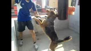 DOGS messing up my workout!!  BLOODY ATTENTION SEEKERS LOL