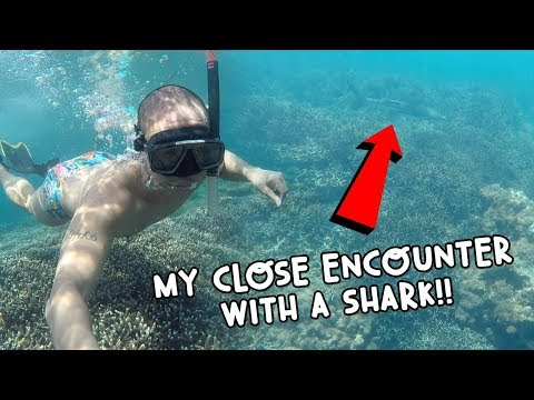 MY CLOSE ENCOUNTER WITH A SHARK (SRI LANKA)! | Vlog #104