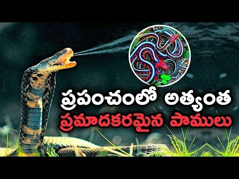 Xxx Mp4 ప్రపంచంలో అత్యంత ప్రమాదకరమైన పాములు 10 Most Dangerous Snakes In The World T Talks 3gp Sex