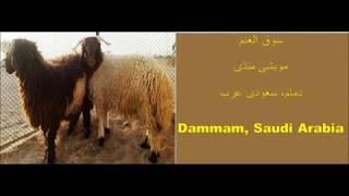 سوق الغنم# مویشی منڈی#  ,عيد الأضحى#   2018 Bakra mandi# Dammam, Saudi Arabia