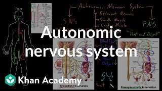 Autonomic nervous system | Organ Systems | MCAT | Khan Academy