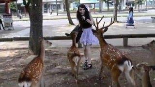 Girl chased by deer in Nara Japan