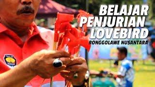 KONTES BURUNG : Cara Cepat Belajar Penilaian Lovebird Versi RONGGOLAWE NUSANTARA