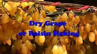 Dry Grape or Raisin Making