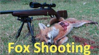 Fox Cub from the Den #tikkat3x