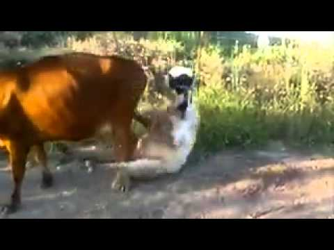 Xxx Mp4 Ben 10 Cow Trying To Fuck 3gp Sex