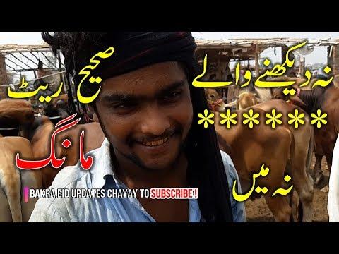Xxx Mp4 Cow Mandi 2018 Ki Mehngai Bakra Eid Sy Pehlay Shuro ISKAY RATE SUN K HERAN NA HO 3gp Sex