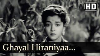 Ghayal Hiraniyaa | Munimji Songs | Dev Anand | Nalini Jaywant | Lata Mangeshkar | Filmigaane