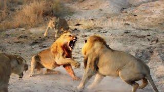 La Savane Africaine : Une LUTTE Pour La SURVIE - Documentaire Animalier 2016