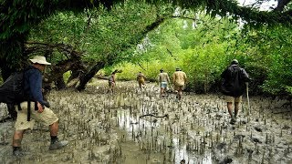 The largest mangrove forest Sundarban (সুন্দরবন), Bangladesh