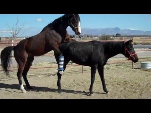 Xxx Mp4 HORSE Love 3gp Sex