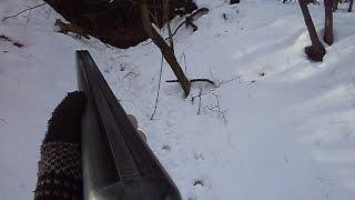 Lov na predatore lisica,kuna,divlja macka.Hunting predators.Predatori caccia
