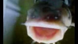 Drowning a Fish