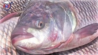Catla Fish catching Episode | Talking Catla Fish Hunting wiki | Katla machhi Muzzle flop Show