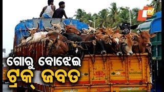 Cattle laden truck seized in Khurda