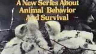Wild, Wild World of Animals intro