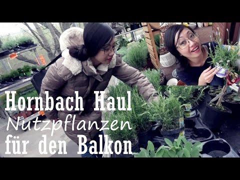 Xxx Mp4 Hornbach Haul Nutzpflanzen Für Den Balkon Tyra At Home 3gp Sex