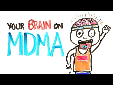Your Brain On MDMA