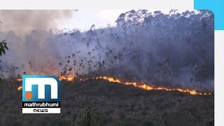 Corruption In Funds Allotted To Prevent Forest Fires  Mathrubhumi News