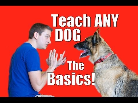 Xxx Mp4 Dog Training 101 How To Train ANY DOG The Basics 3gp Sex