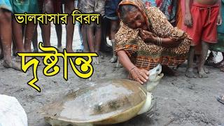একটি কচ্ছপ যখন সন্তানের মত ! Latest bangla hit news !