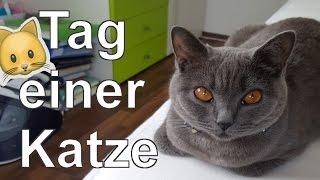 Ein Tag im Leben einer Katze!