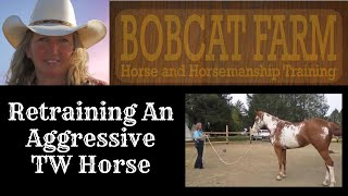 Retraining An Aggressive 3 Year old TW Horse