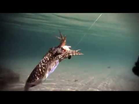 Rapala Squid Jig IKADO Eging