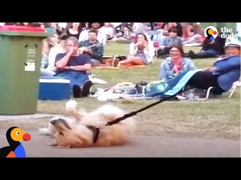 Xxx Mp4 Dog PLAYS DEAD To Avoid Going Home While Park Crowd Watches The Dodo 3gp Sex