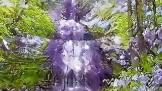 Jacaranda flower waterfall hd wallpaper theme #DeepLearningArt