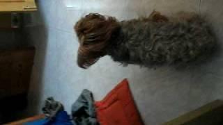 haha My dog it's stange??!!!