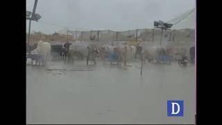 Mawashi Mandi after rain in Karachi