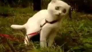 Chat possédé par le démon !