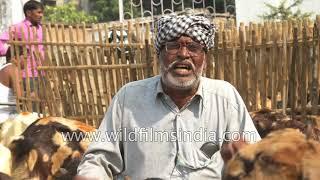 Livestock trader from Alwar, Rajasthan speaks about hybrid goats