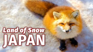 Why Japan is the Snow Capital of the World