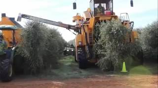 Amazing Fruit Harvesting Machines Compilation